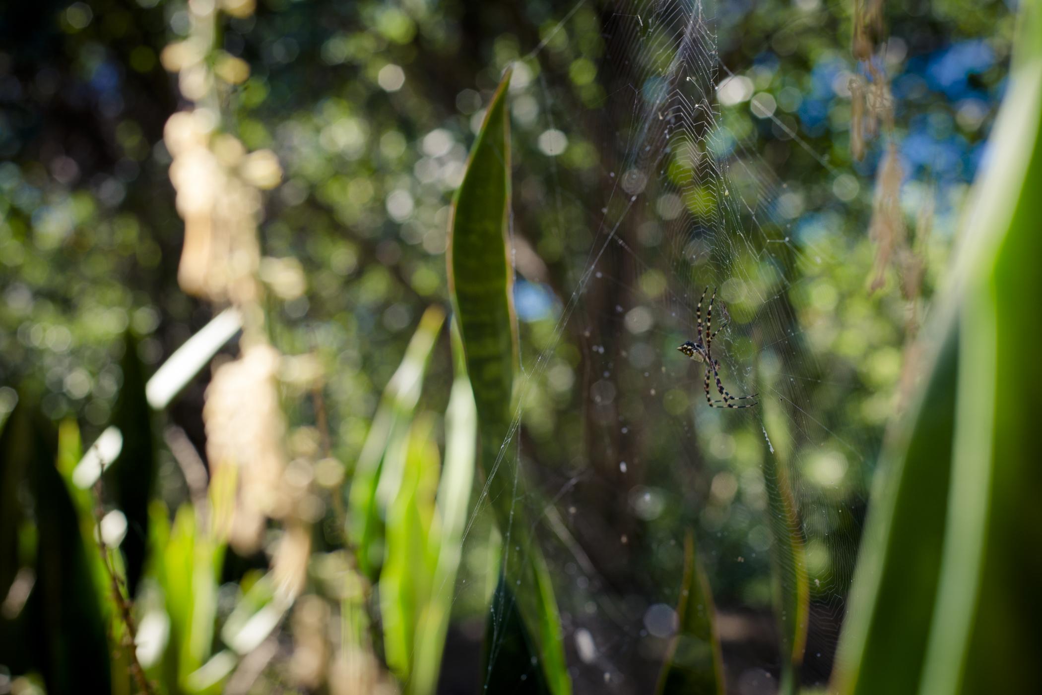 012014-Culebra-JuliaLuckettPhotography-34