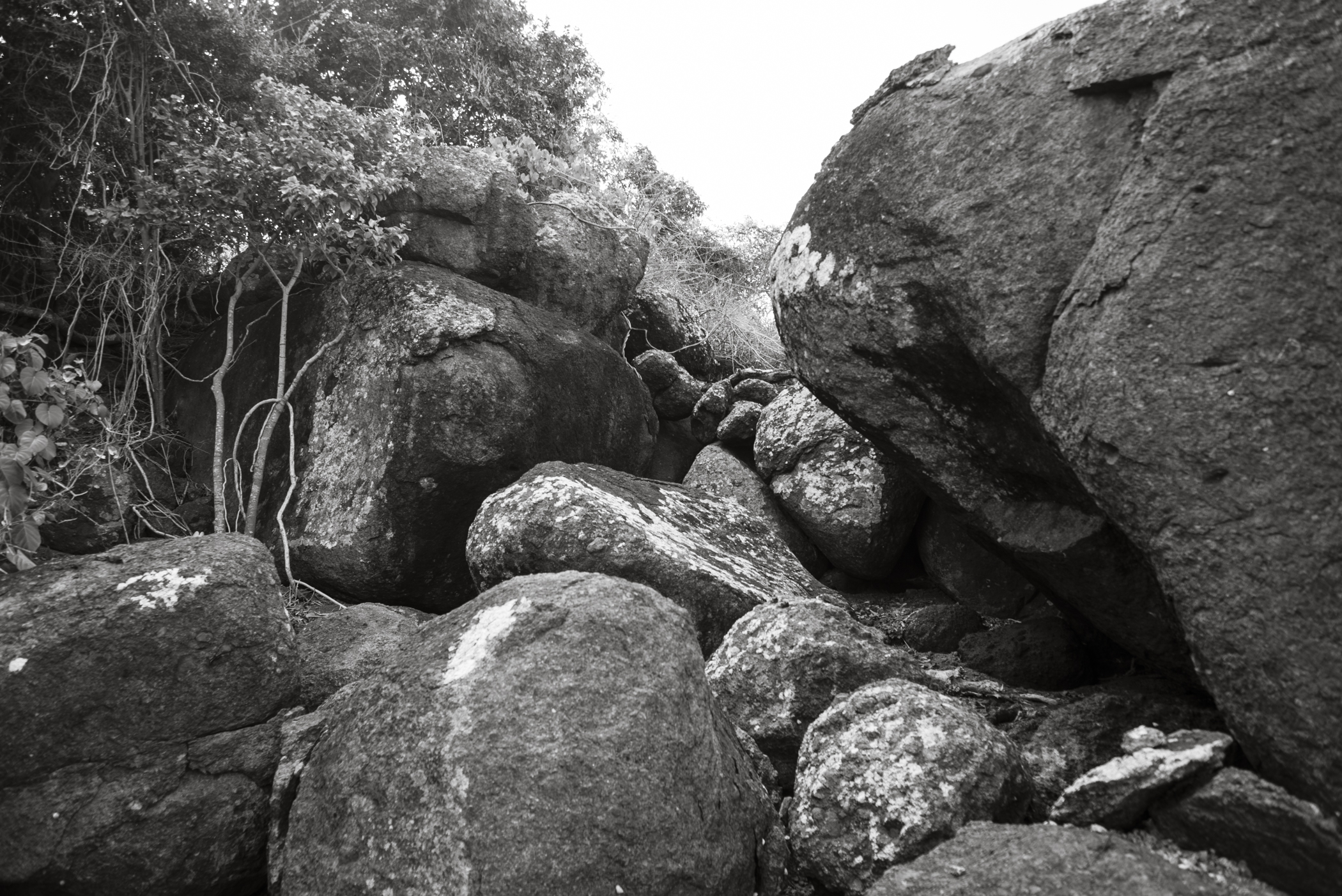 012014-Culebra-JuliaLuckettPhotography-68